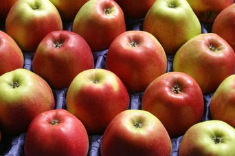 Best Fat Burning Foods Apples